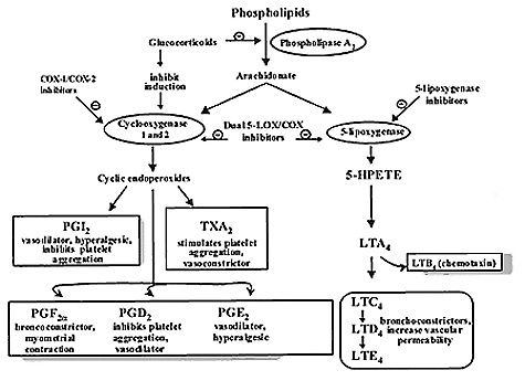Steps in the biosynthesis of eicosanoids